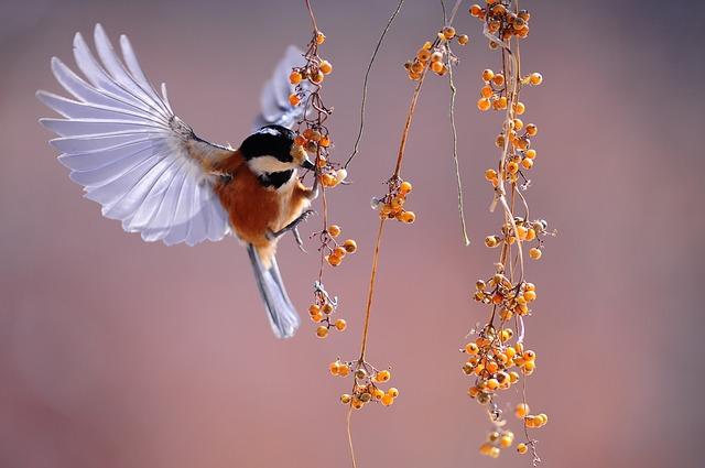 ptáček u větvičky