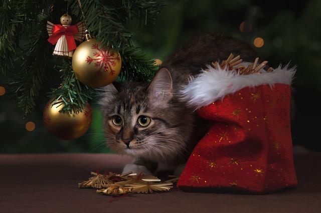 kočka o vánocích