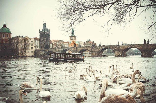 labutě na Vltavě