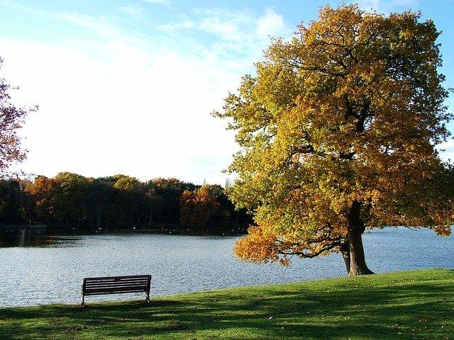 lavička u stromu